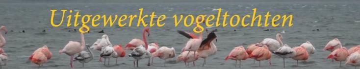 uitgewerkte vogeltochten