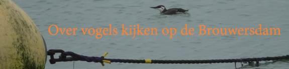 Vogels kijken op de Brouwersdam