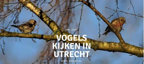Vogels kijken in Utrecht