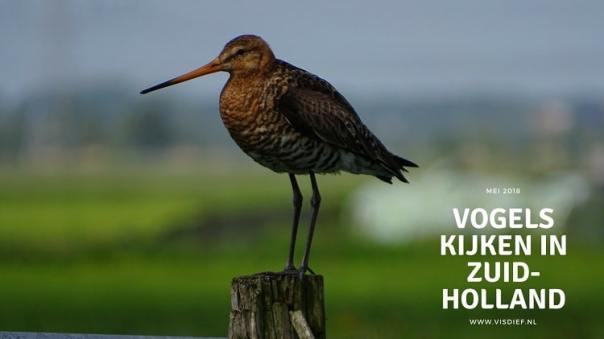 Vogels kijken in Zuid-Holland