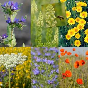 Inheems bloemenmengsel