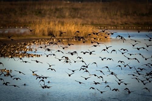 vogels kijken in portugal