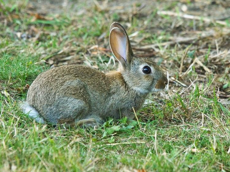 jong konijn grote gat ooltgensplaat