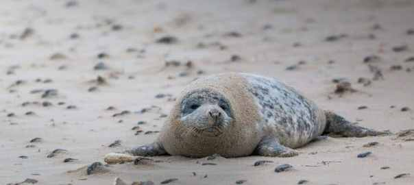 leukste zeehondensafari s in nederland