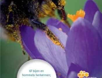 recensie minigids bijen en hommels maureen kemperink