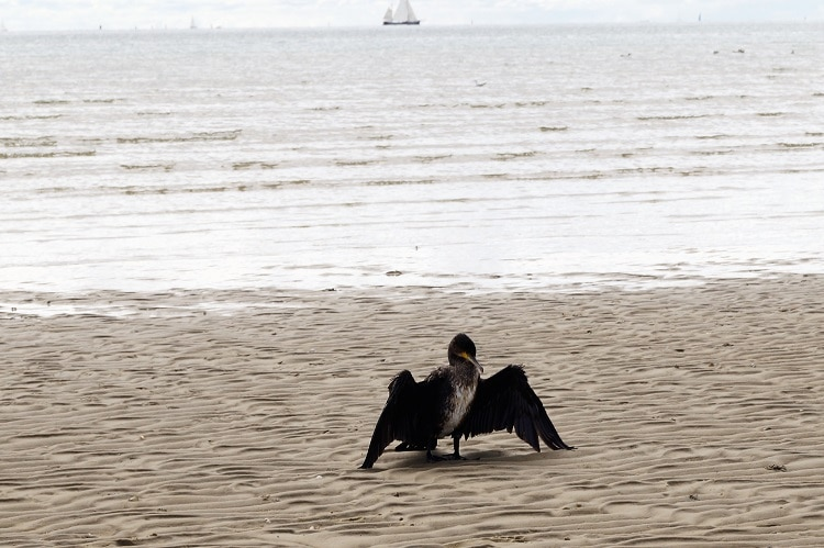 vogels kijken op terschelling strand