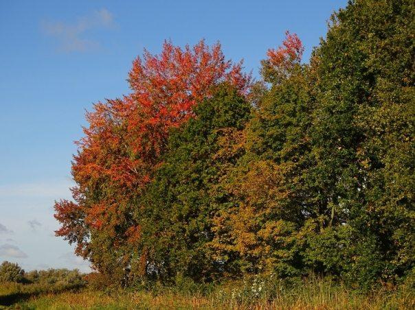 bomen biesbosch