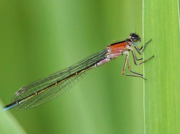 libelle een