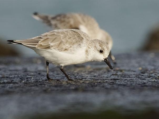 vogels kijken brouwersdam sjaak huijer a