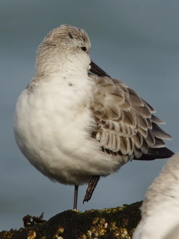 vogels kijken brouwersdam sjaak huijer g