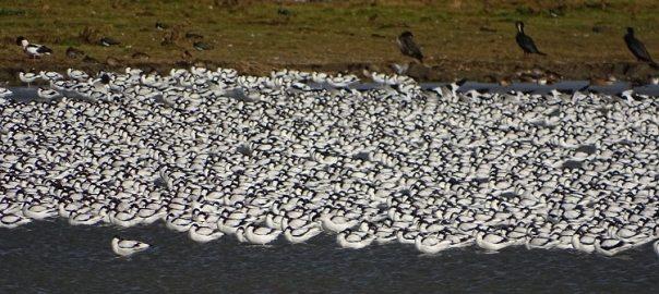 vogels kijken in polder breebaart