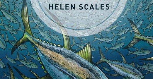 recensie het oog van de school helen scales