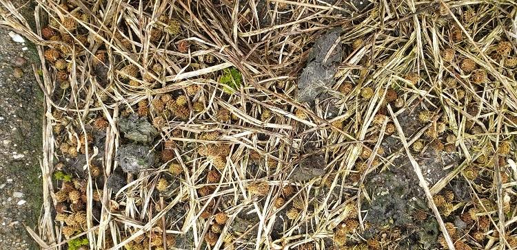 uilenbal zeedijk zoommeer