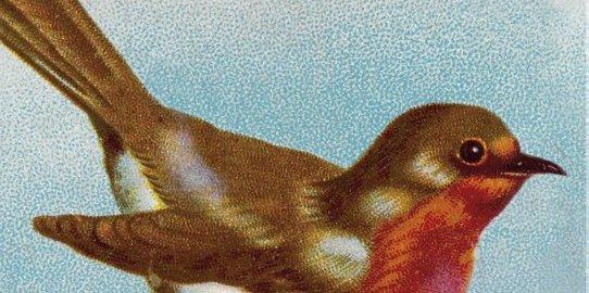 recensie het roodborstje stephen moss