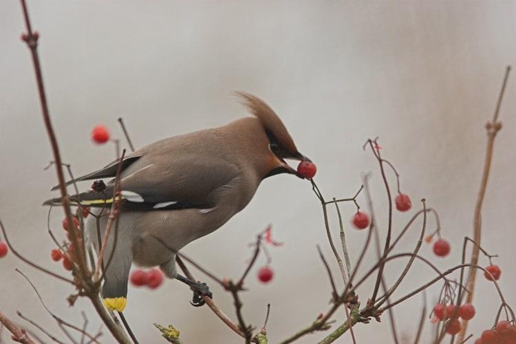 N° 2: BirdingBreaks