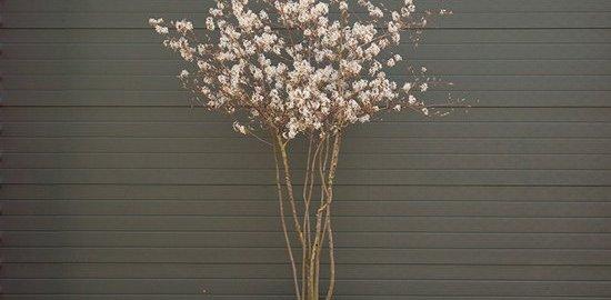 vier voordelen van de krentenboom