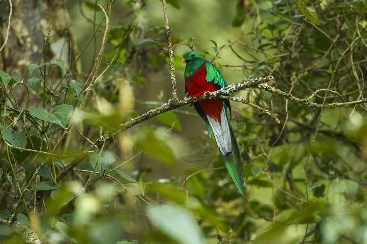 Vogels kijken in Costa Rica (fotobron: Wikipedia)