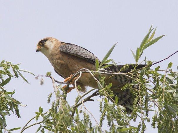 vogelreizen hongarije