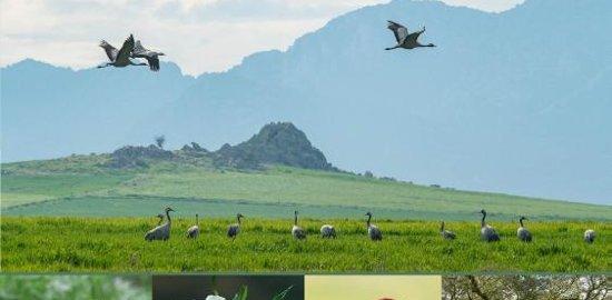 vogels kijken in de extremadura dirk hilbers spanje