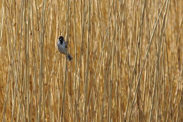 Vogels kijken in de Galathese Kreek (Fotograaf: Sjaak Huijer)