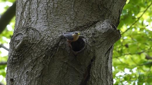 vogelwandeling bij ulvenhout
