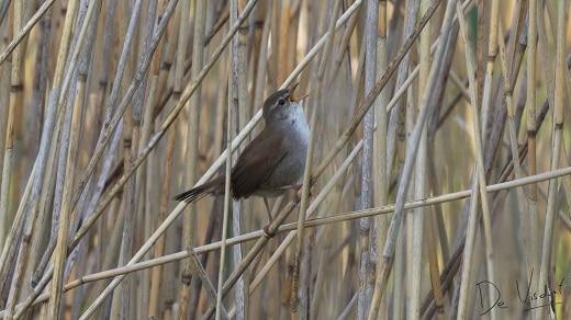 vogelwandeling op sint philipsland