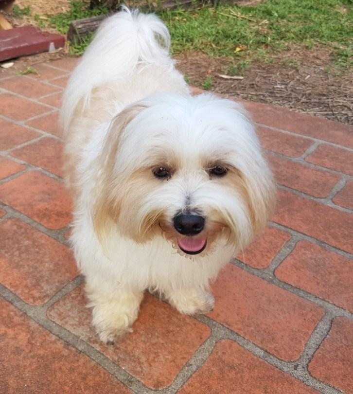 Bundaberg Dog Training