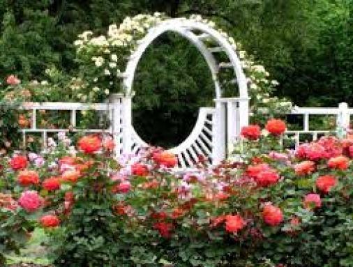 Rose Gardenimages