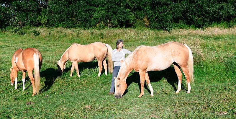 les chevaux vous accueilleront sur leurs terres, terrains d'expression et de découvertes