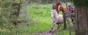 Leadership et management avec le cheval