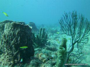 Sunkist Reef