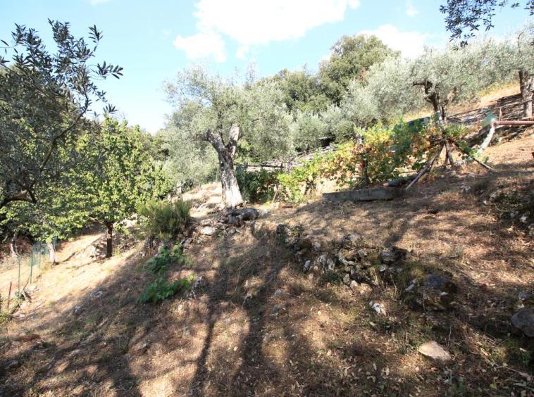 22 - Poggiolo - Calvi dell'Umbria - Esterno Giardino