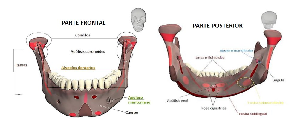 Diseño de prótesis en 3D