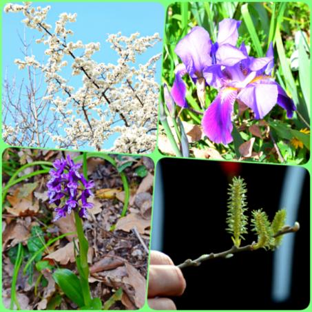 fiori-escursione-tempio-pausania