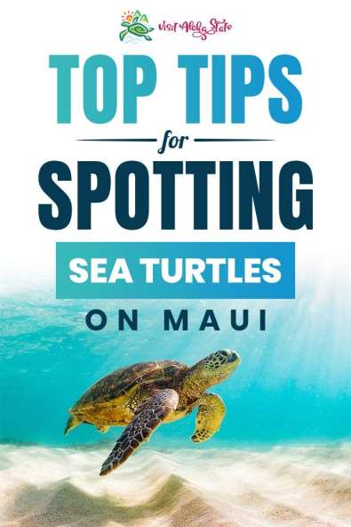 Top Tips for Spotting Sea Turtles on Maui