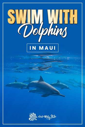 Swim with Dolphins in Maui Hawaii