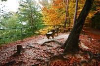 outono-17