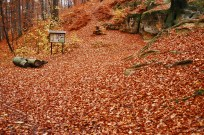 outono-18