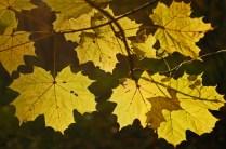 outono-20