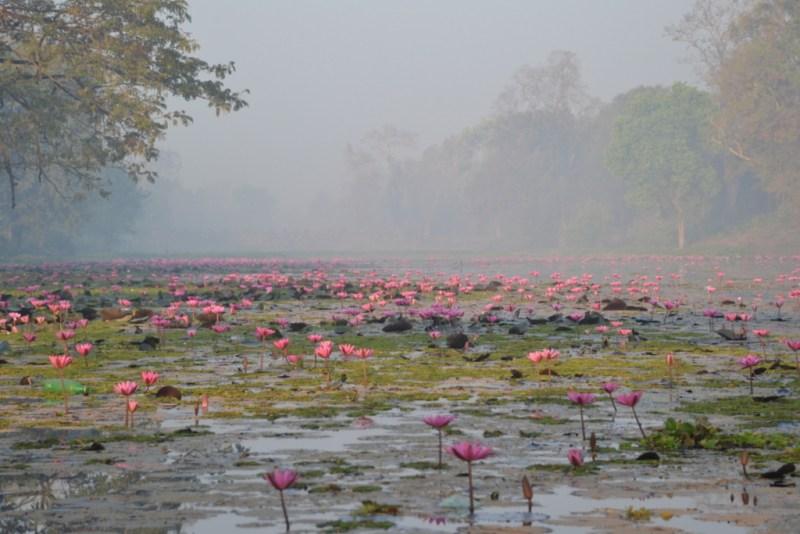 A moat full of flowers