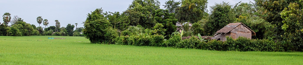 Rice field in Banteay Chhmar, Cambodia