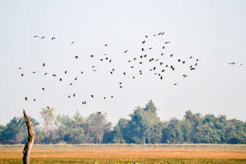 Meborn Baray, Banteay Chhmar Cambodia