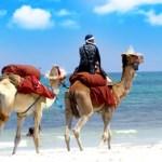 Zwei Kamele mit einem Reiter bei Sonnenschein am Strand.