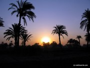 aegypten palmenstrand