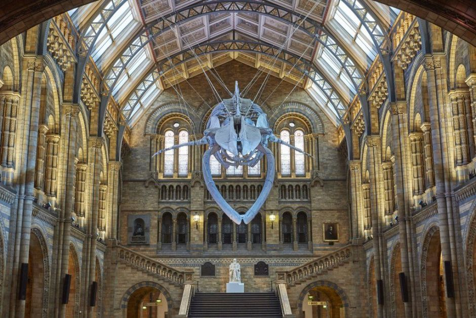 national history museum hintze hall