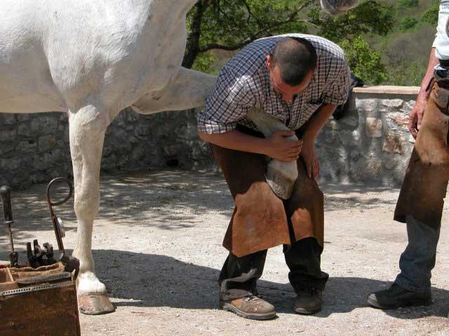 Corso sulla manutenzione dello zoccolo del cavallo
