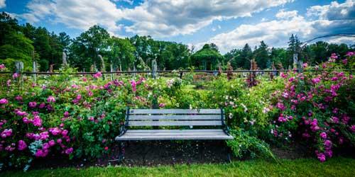 Connecticut Gardens, public gardens, rose gardens, garden shows