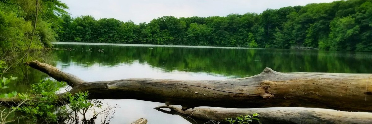 Oxbow Lake (c) Mary Fry Comden
