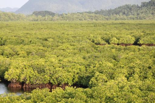 DEL CARMEN MANGROVE FOREST