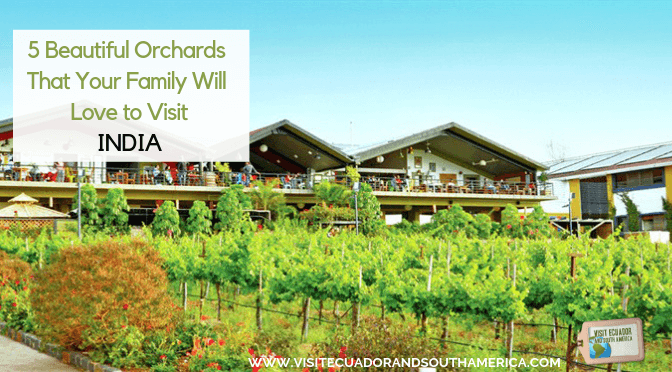 5 Beautiful Orchards in India That Your Family Will Love to Visit